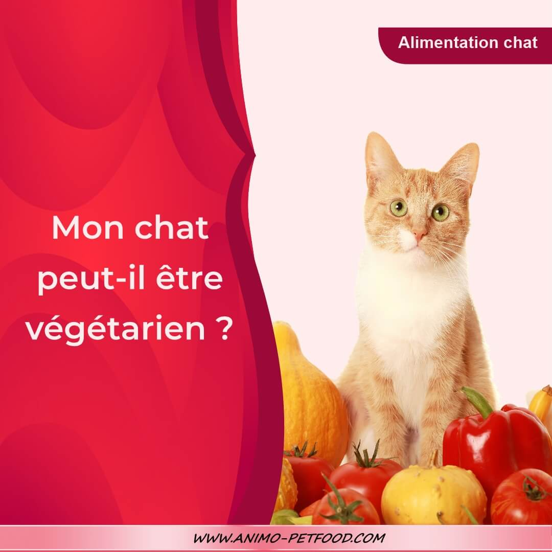 alimentation-chat-vegetarien-nourriture