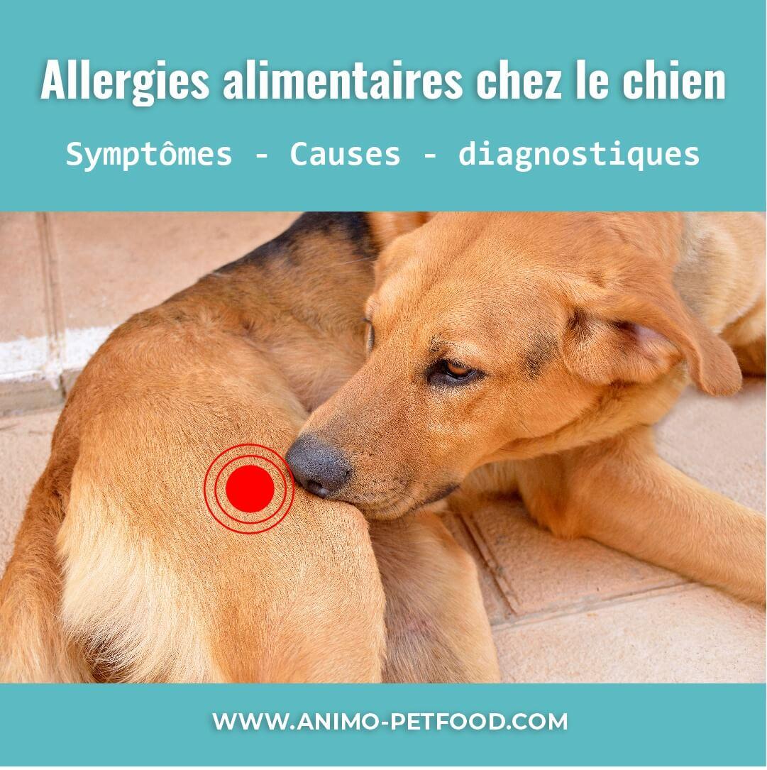 Les Meilleures Options De Nourriture Pour Votre Chien Souffrant D Allergies