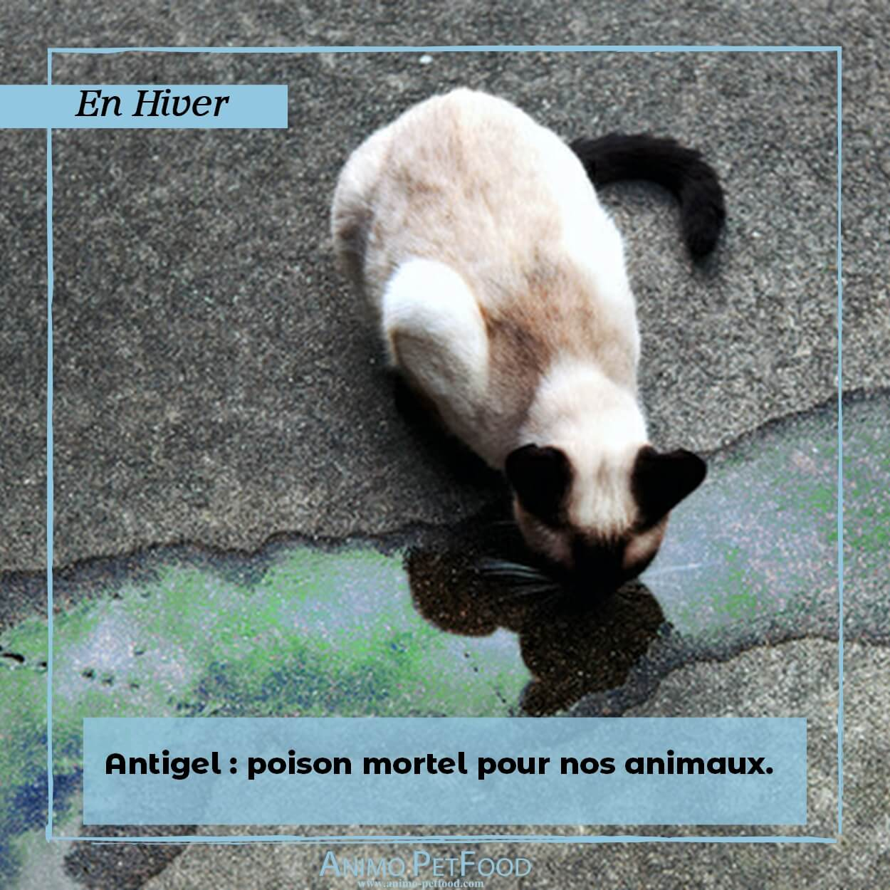 HIVER-antigel-empoissonement antigel chat-empoissonement antigel chien-chiot-chat-chien-chaton