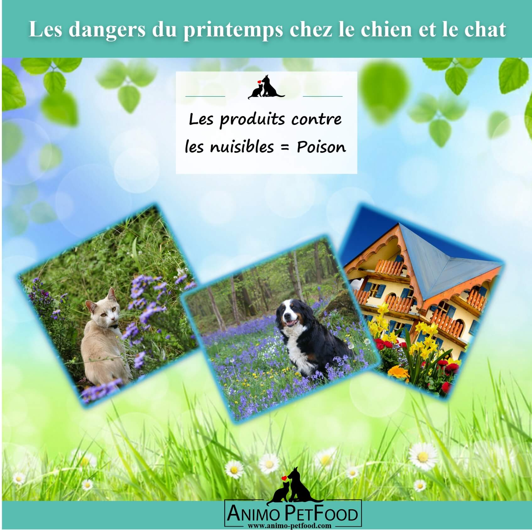 dangers du printemps chez le chien et le chat-raticides-poison chien-poison chat