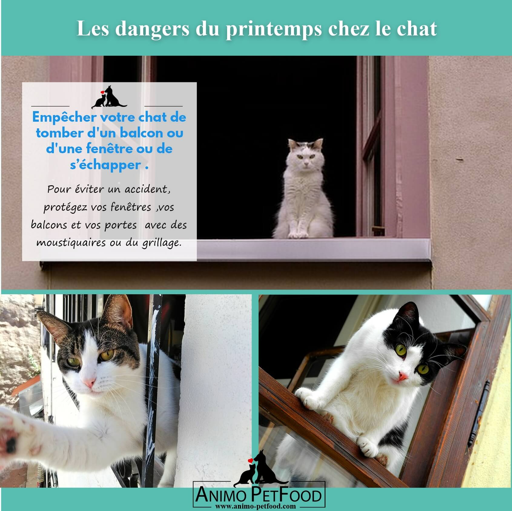 dangers du printemps chez le chat- fractures chat-accident chat