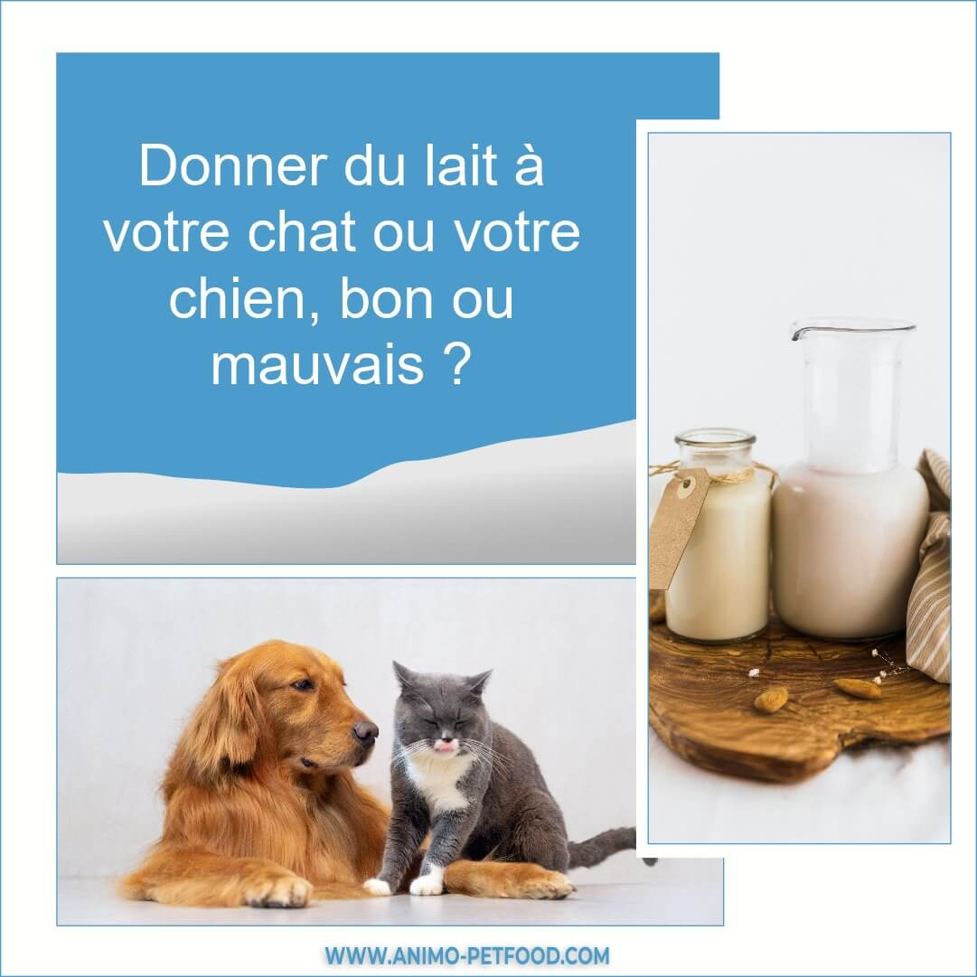 peut-on-donner-du-lait-a-un-chat-ou-un-chien