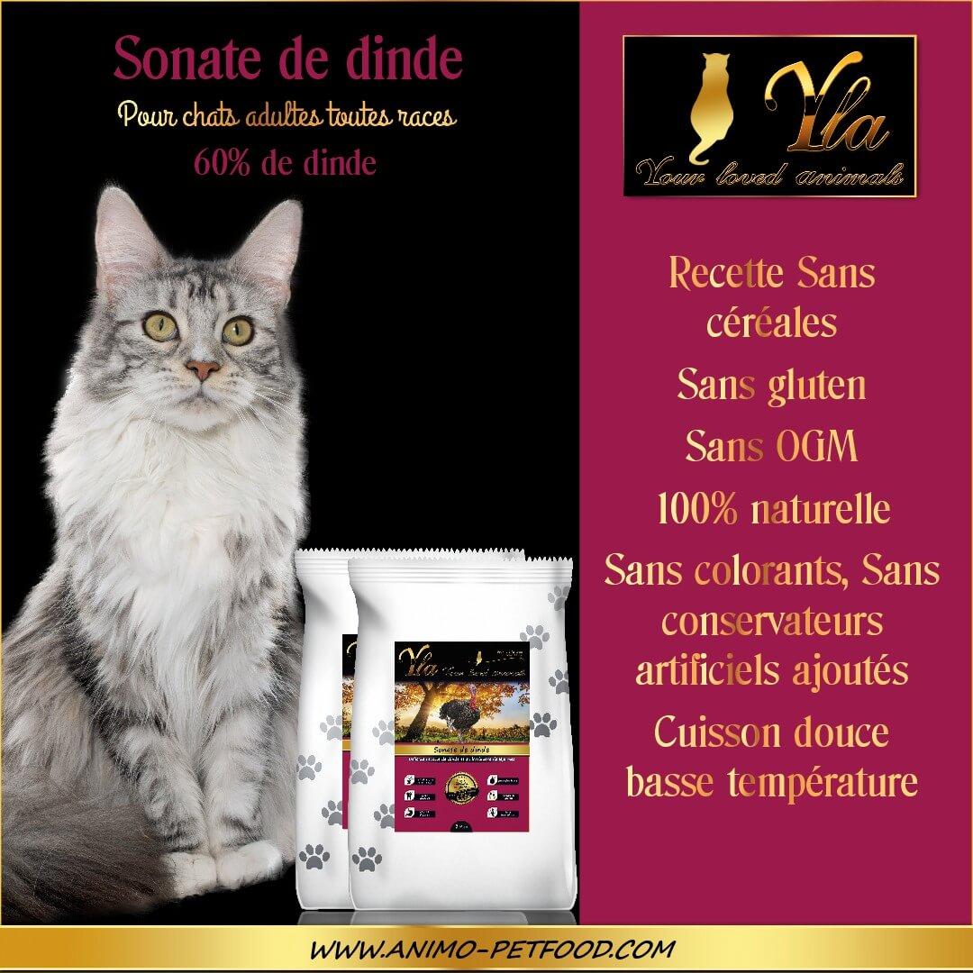 alimentation-sans-cereale-ni-gluten-pour-chat