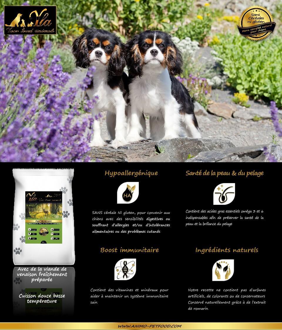 aliment-hypoallergenique-chien-petite-race-allergie-alimentaire