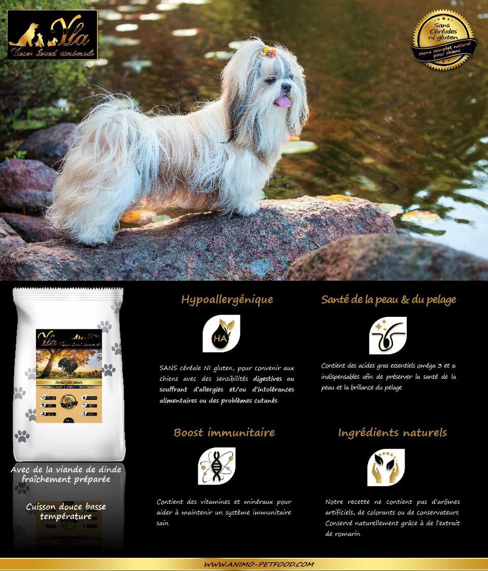 aliment-hypoallergenique-chien-allergie-alimentaire