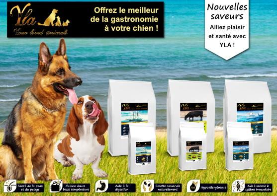 croquettes-pour-chiens-allergiques